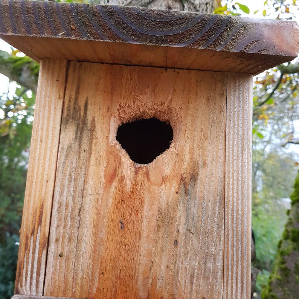 Nistkasten für Vögel ohne Aufklopfschutz