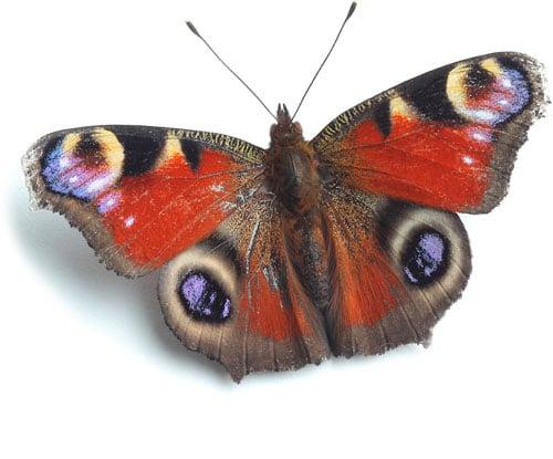Nützlingshotel sind positiv für Schmetterlinge